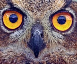 Owl Gift Ideas Header Image